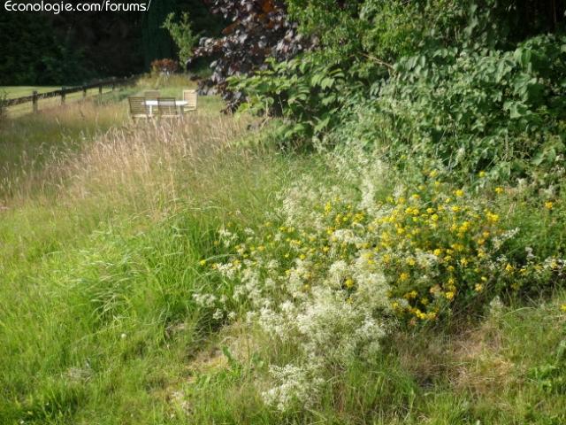 Concours jardins sauvages enfin presque - Difference entre cafard et cafard de jardin ...