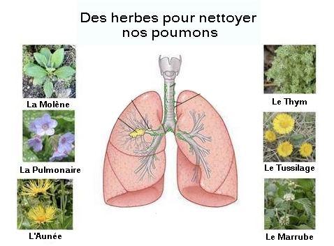 Des plantes pour nettoyer les poumons tabac et pollution for Nettoyer feuilles plantes