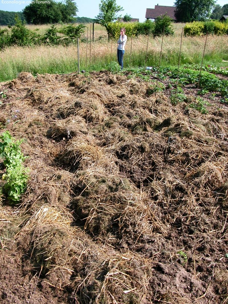 le potager du paresseux jardiner plus que bio sans fatigue page 30 forums des nergies. Black Bedroom Furniture Sets. Home Design Ideas