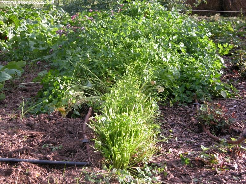 le potager du paresseux jardiner plus que bio sans fatigue page 46 forums des nergies. Black Bedroom Furniture Sets. Home Design Ideas