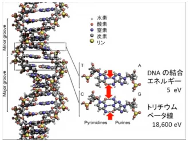 DNA - تریتیوم (2) .jpg