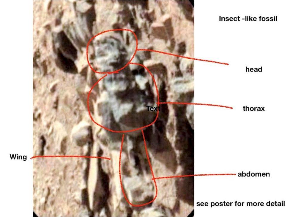 जीवाश्म के आकार कीट मार्च विदेशी जीवन-Romoser 1024x728.jpg