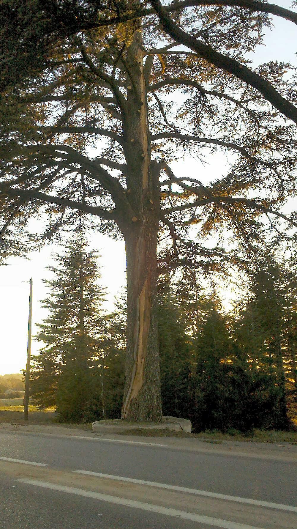 बिजली का पेड़ (1) .jpg