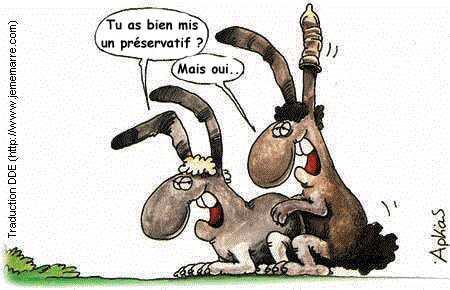 खरगोश.jpg