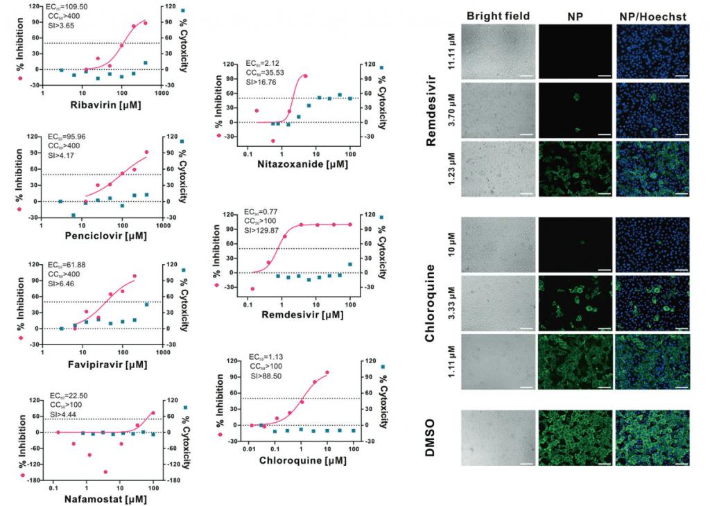Screenshot_2020-03-19 Remdesivir וכלורוקין מעכבים ביעילות את וירוס הקורונווירוס החדש שהופיע לאחרונה (2019-nCoV) ב- [...]. Png