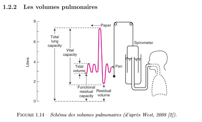 Screenshot_2020-04-03 ऑक्सीजन परिवहन की गतिशीलता और फुफ्फुसीय एसीनस के भीतर स्थानांतरण - document.png