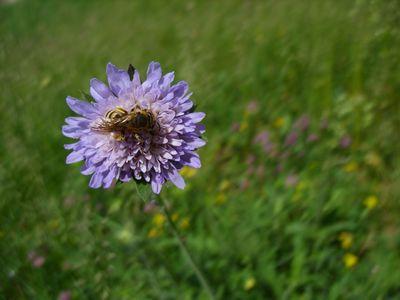 çiçek + böcek.