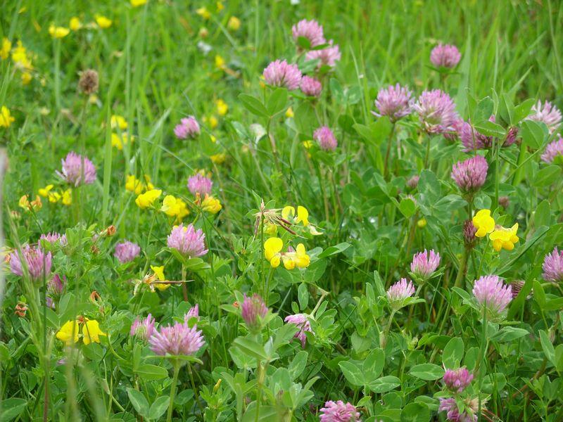 prairie.fleurie.jpg