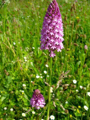 floare violet.JPG