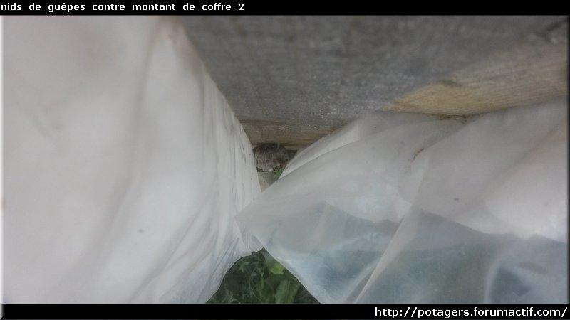 wasps_nests_contre_montant_de_coffre_2.jpg