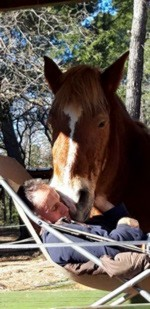Nap-horse.jpg. ناب-horse.jpg