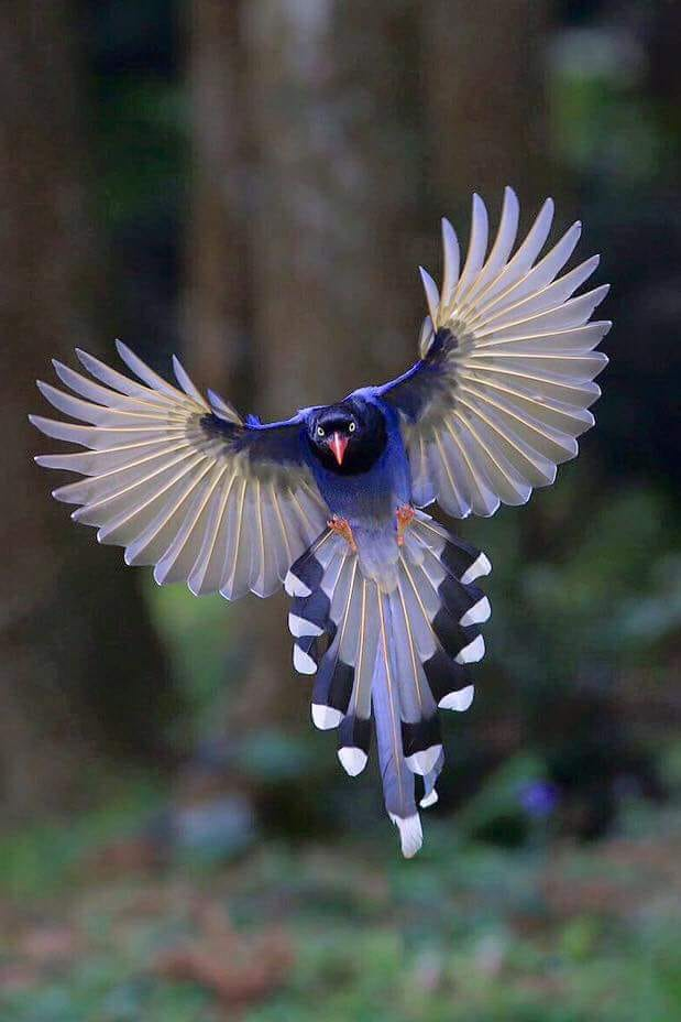 bird_blue.jpg