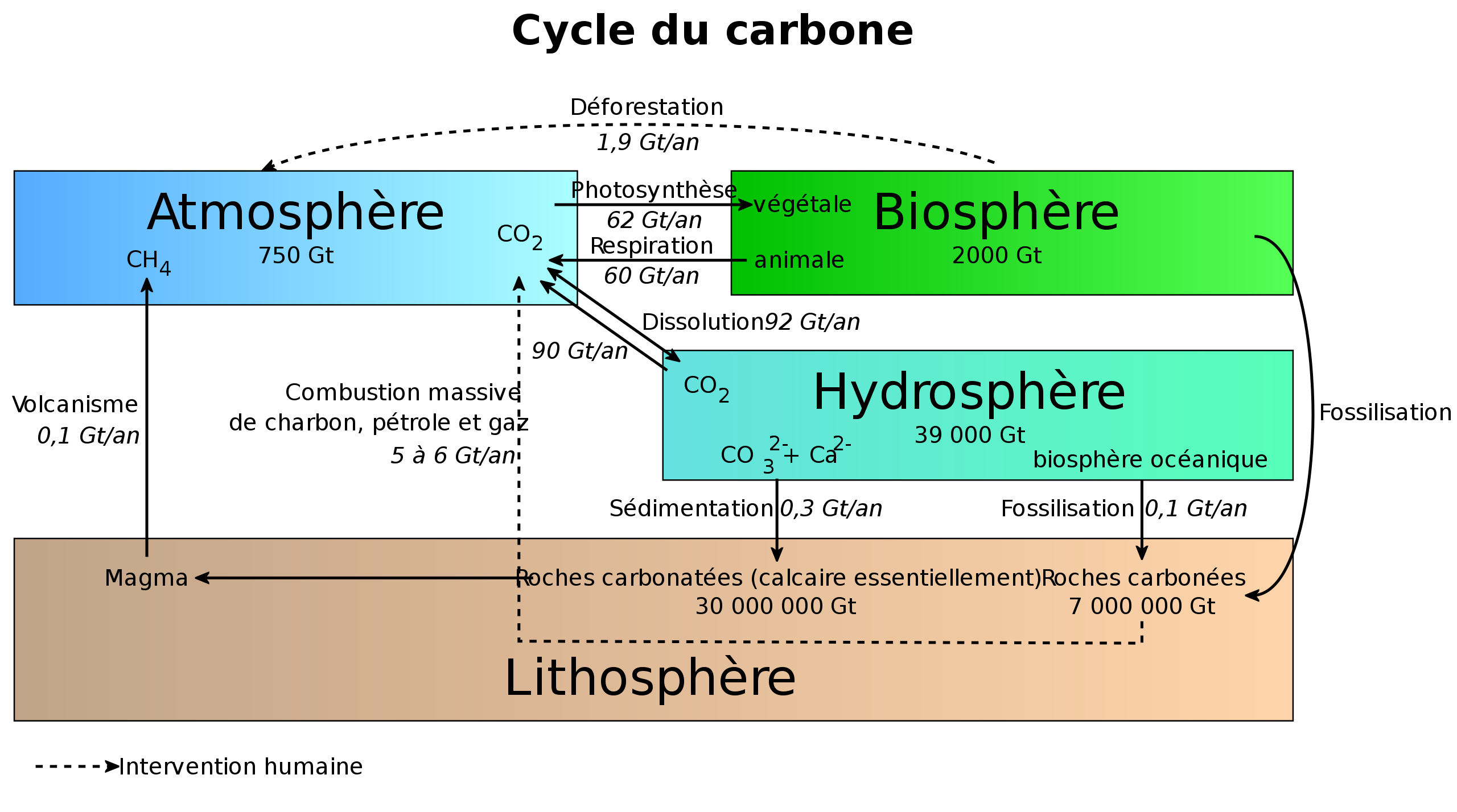 Cycle_du_carbone2.svg.png