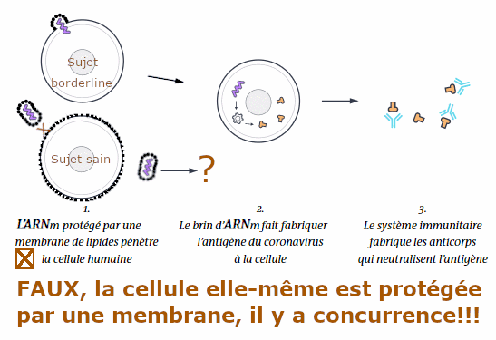 MRNA VS cell.png