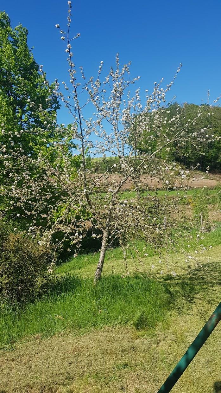 עץ תפוח.jpg