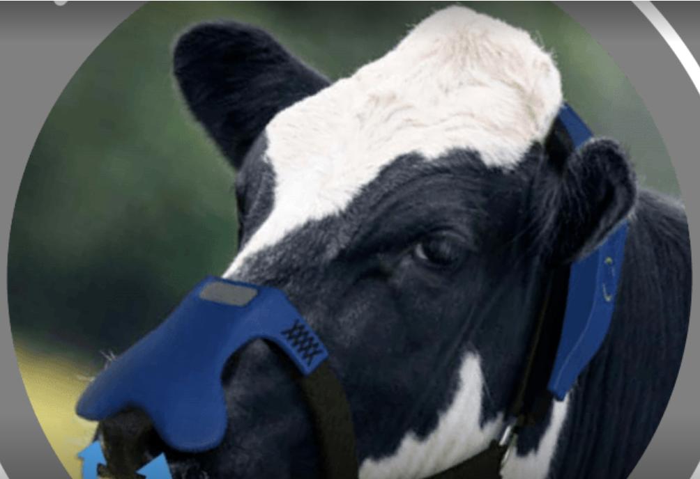 स्क्रीनशॉट 2021-06-10 10-13-16 पर मीथेन यह कंपनी गाय के burps.png को फ़िल्टर करने के लिए मास्क विकसित कर रही है।