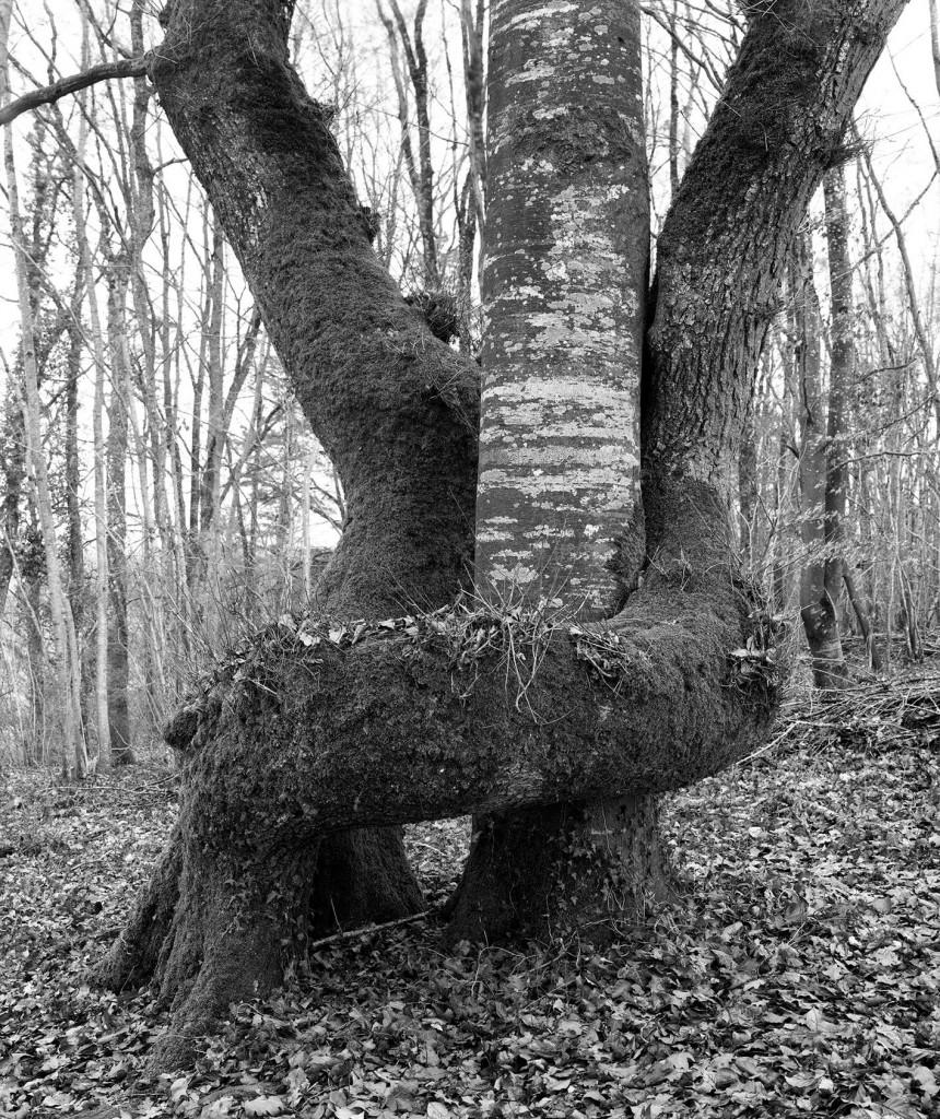 Trees_enlassés.jpg
