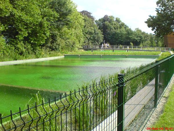 Piscina-ecologic-pic529.jpg