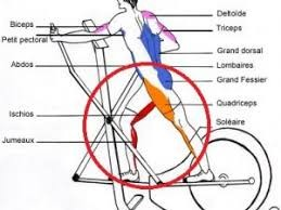 अण्डाकार बाइक muscles.jpg
