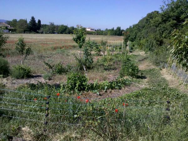 Grădina Pinchinats 25-Apr-14 (10) .jpg