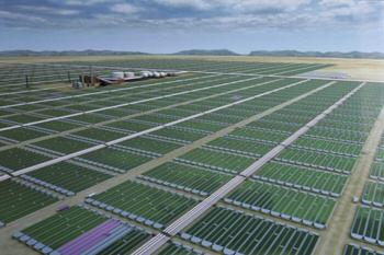 champ aquaculture ou algaculture de microalgues