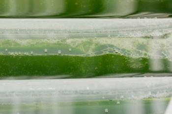 microalga biogaz